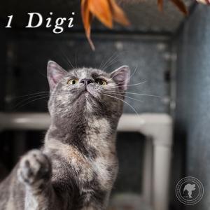 Digi1