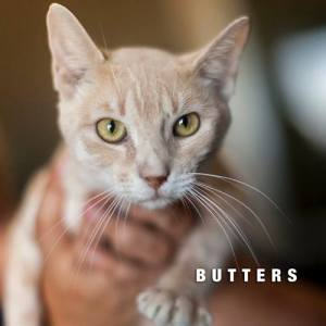 Butters2