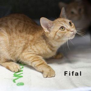 Fifal