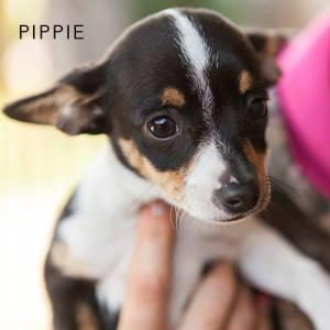 Pippie